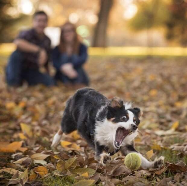 Животные, которые покорят вас своей харизмой