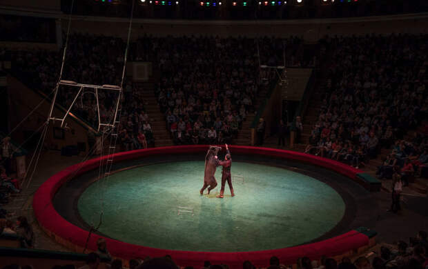 Медведь напал на дрессировщицу: как прошло вечернее шоу в орловском цирке