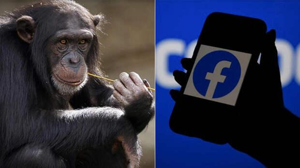 """На Facebook ИИ пометил видео с чернокожими как """"о приматах"""""""