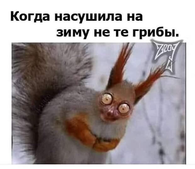 На изображении может находиться: текст «когда насушила на зиму не те грибы. Zeas»