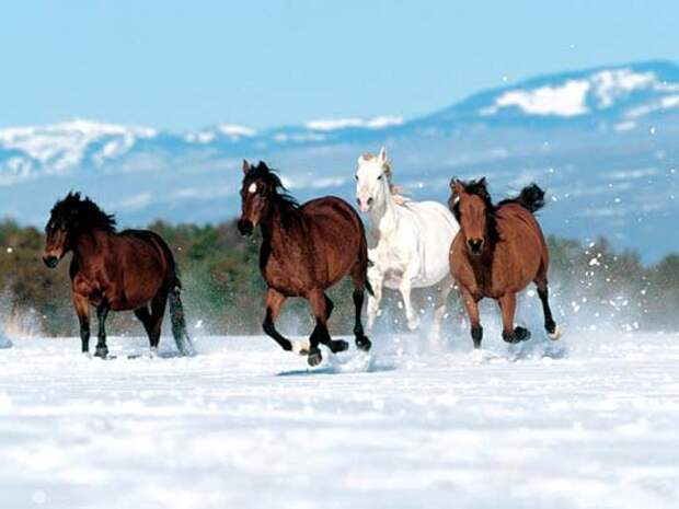 Самые красивые лошади. кони, скакуны, жеребята. Фото