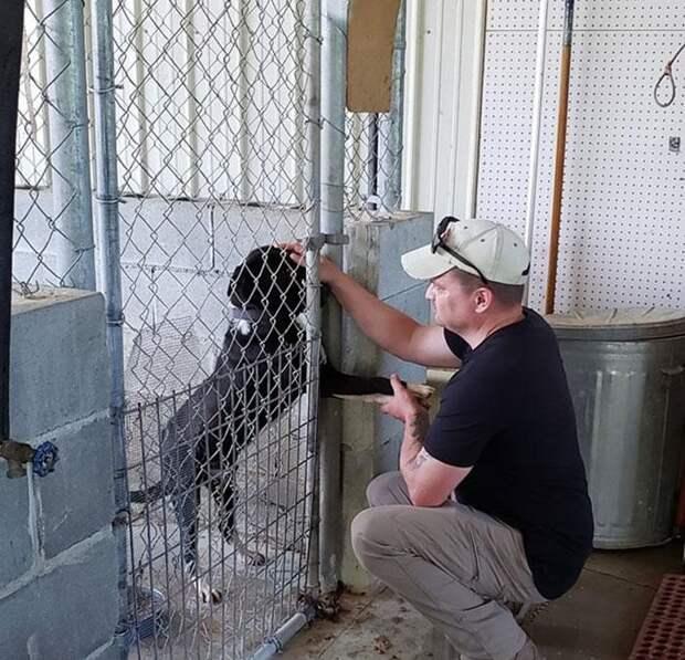 Пес из приюта так хотел найти хозяина, что протягивал лапу каждому, кто проходил мимо клетки