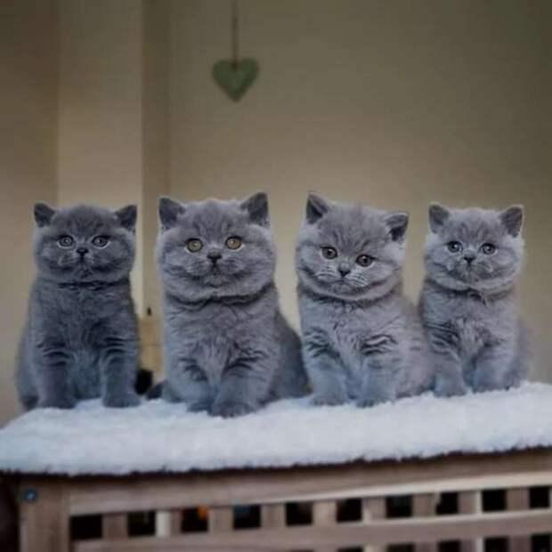Прикольные фотографии котиков. Кити кити юмор. Подборка milayaya-cat-milayaya-cat-33220320102020-8 картинка milayaya-cat-33220320102020-8