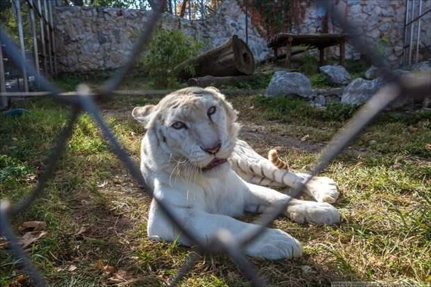 Сербские пленники животные, путешествия, факты, фото