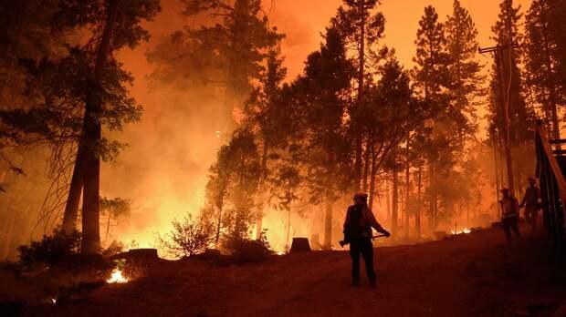 Пожарные во время тушения лесного пожара - РИА Новости, 1920, 16.09.2020