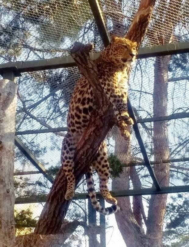 Животные, которые делают то, что им вздумается, и ни о чем не жалеют