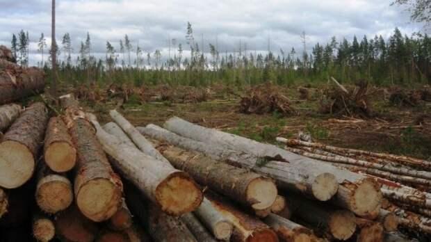 Реакция финнов на запрет вывоза леса подчеркнула важность торговли с РФ