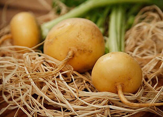 Под зиму сажаем — ранний урожай получаем!
