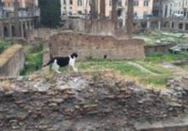 В Риме откроют для туристов место убийства Цезаря