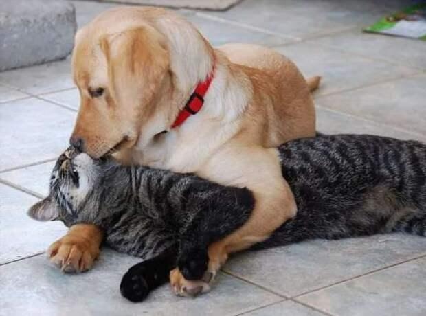 Прикольные фотографии котиков. Кити кити юмор. Подборка milayaya-cat-milayaya-cat-33220320102020-7 картинка milayaya-cat-33220320102020-7