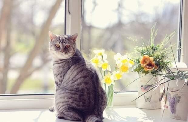 История о запертой на балконе хозяйке и настырной кошке…