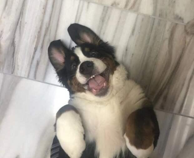 Доказательства того, что счастье можно измерять в собаках