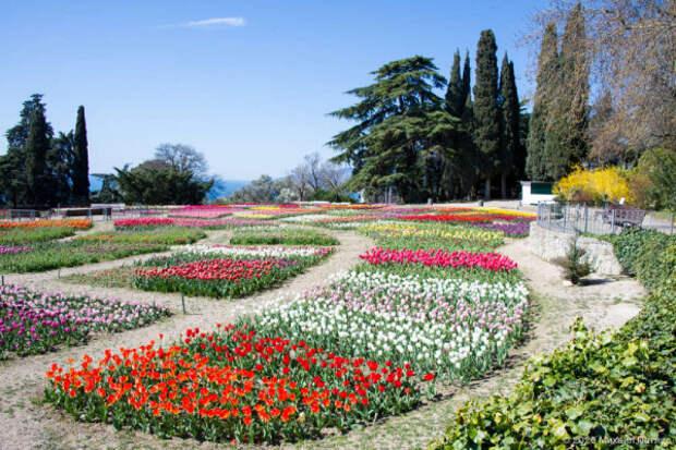 «Парад тюльпанов 2020» в Крыму. Виртуальная прогулка (ФОТО)
