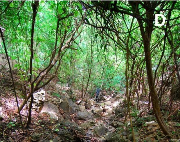 Микрохамелеон Brookesia micra (лат. Brookesia micra)