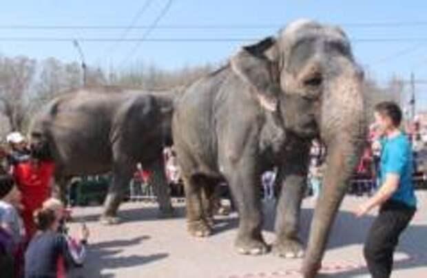 Правительство Дании выкупит пожилых слонов у цирков
