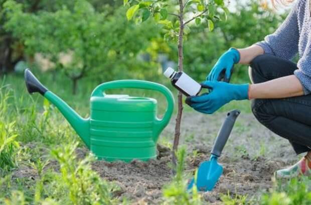 10 дел, для которых нужно пригласить садовника (хотя бы в первый раз)