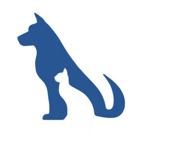 Неизвестный выкинул из окна собаку в Кингисеппе