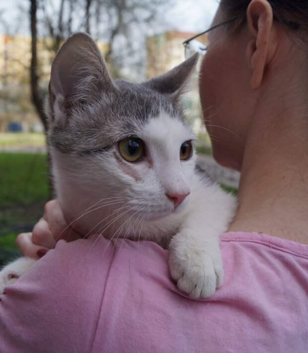 Ищем родного человека для трогательного и застенчивого котёнка!