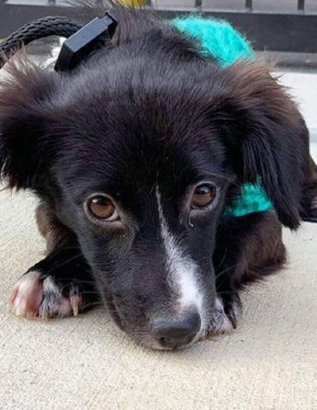 Два щенка были найдены без мамы, в которой отчаянно нуждались