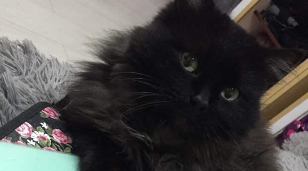 Бездомный кот притащил в чужой двор тощего котёнка и скрылся, а кроха спрятался в гараже…
