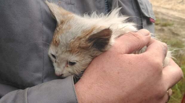 Семья приехала в лес по грибы, когда услышала плач брошенного кем-то котенка