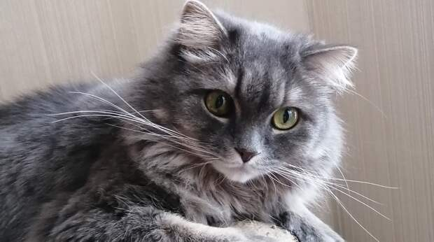 Кота дважды возвращали в приют. В первый раз у него были сломаны лапы, а во второй раз он оказался болен…