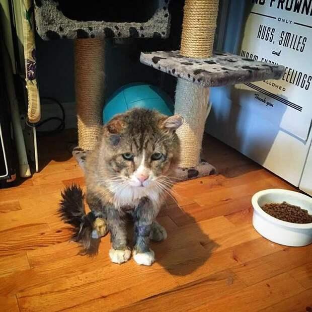 Взгляд этого уличного кота разбил сердце девушке...