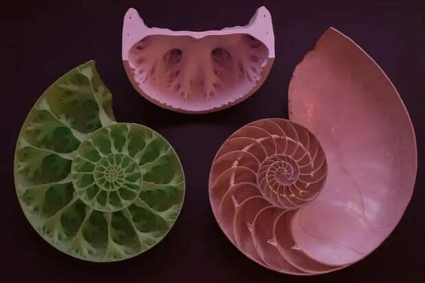 Почему у древних моллюсков необычная структура раковин