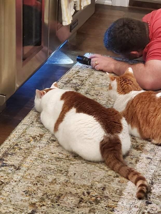 20+ котов, которые трудятся не покладая лапок