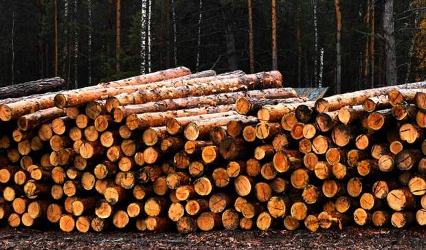 В Финляндии прокомментировали решение Путина о запрете вывоза древесины