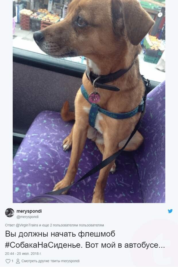 собака на сиденье