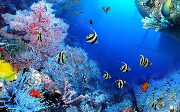 Райские сады в океанской бездне