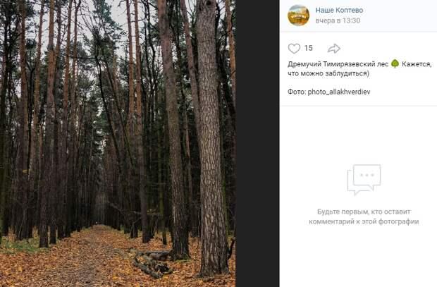 Фото дня: в сердце Тимирязевского леса