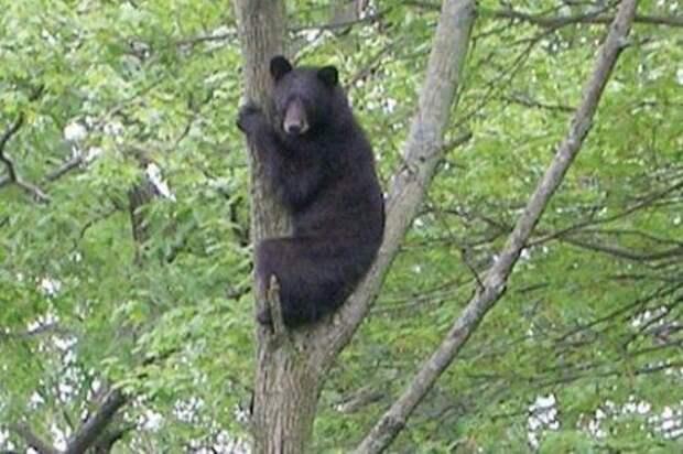 Вы не поверите, от кого так улепетывал медведь!
