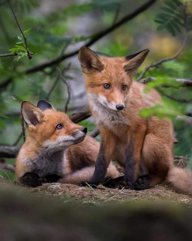 Очаровательные детёныши животных