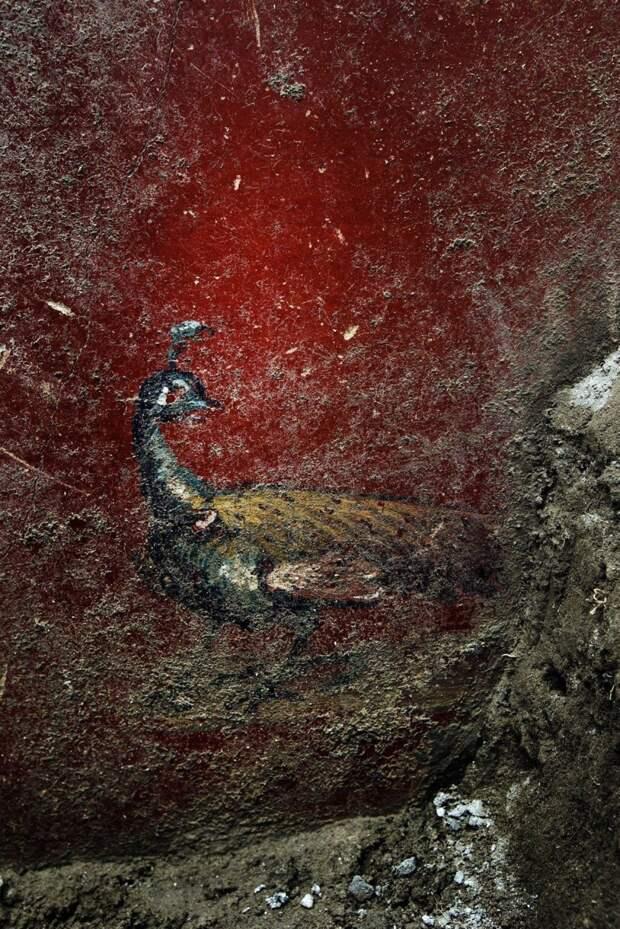 В Помпеях снова начались раскопки