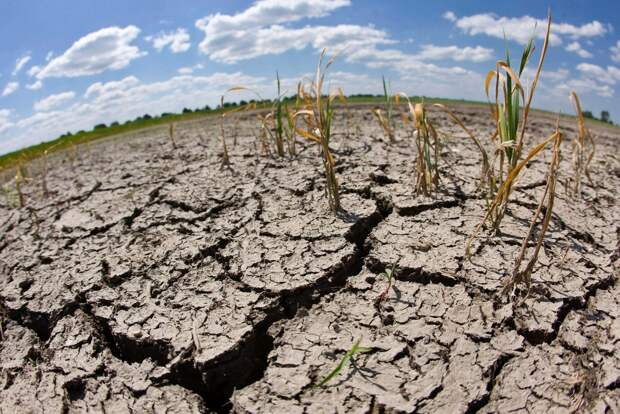 Ученые предсказали катастрофические изменения климата к 2050 году