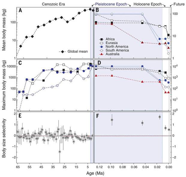 Рис. 3. Изменение размеров млекопитающих в течение кайнозоя. В каждой паре графиков слева показан весь кайнозой (от 66 млн лет назад до настоящего времени), справа — поздний плейстоцен и голоцен (от 125 000 лет до ближайшего будущего). По горизонтальной оси — время в млн лет назад. Первая пара графиков (A, B) — средняя масса тела, вторая (C, D) — максимальная масса тела, третья (E, F) — избирательность вымирания по размеру (как на рис. 1). Изображение из обсуждаемой статьи в Science