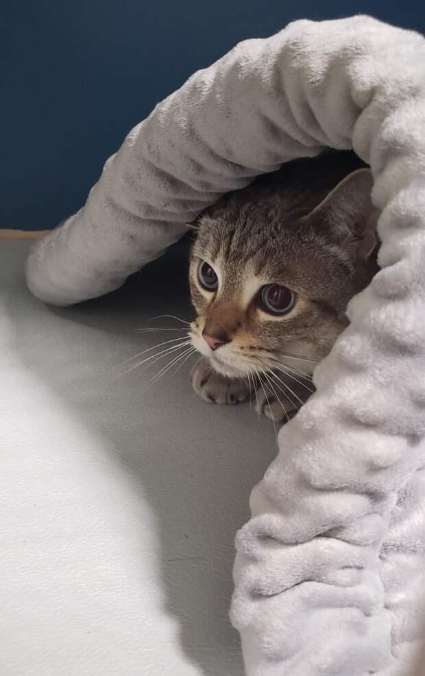 кот высунул голову из-под одеяла