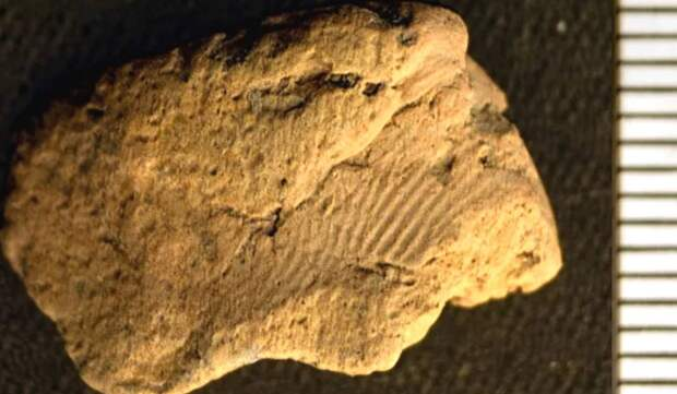 Отпечаток пальца возрастом 5 тысяч лет обнаружили в Британии