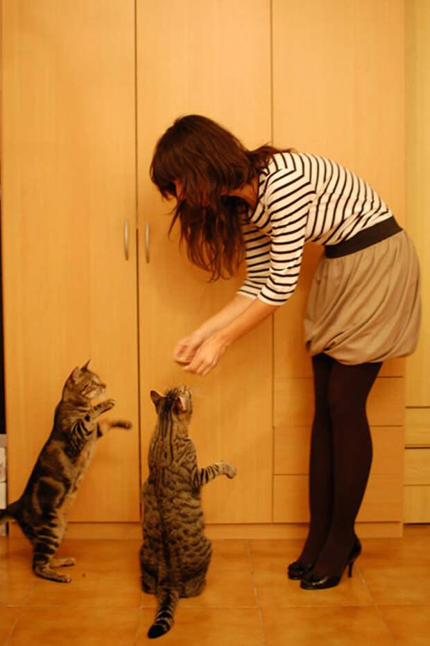 falda momita blog