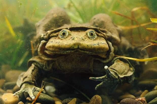 ugliest11 11 претендентов на звание самого уродливого животного на планете