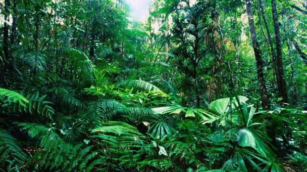 Восстановить тропические леса помогут кофейные отходы
