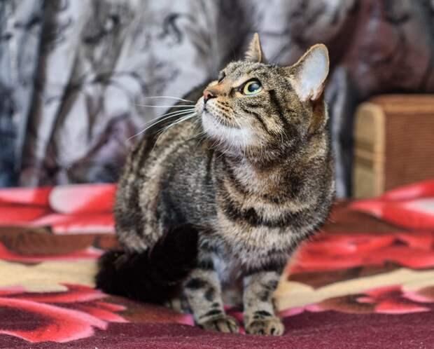 Посмотрите, пожалуйста, на мраморную красавицу! Может это ваша кошка?!!