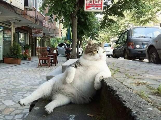 Более 25 снимков, демонстрирующих бесспорные таланты котов