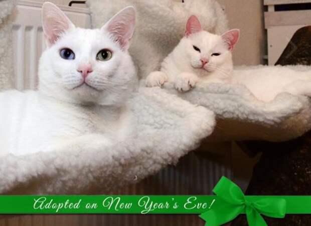 Раз в жизни белоснежный кот Санта приблизился к людям, чтобы попросить еды… И за это получил пулю!