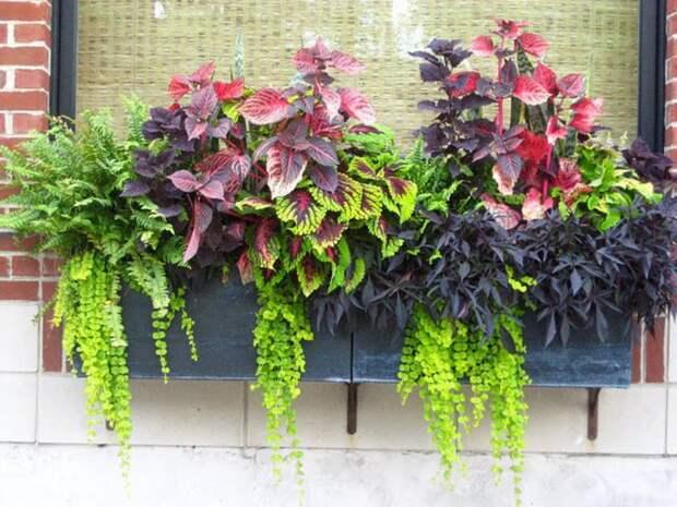 Озеленение балкона, лоджии, террасы. Композиции