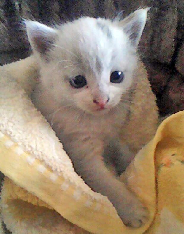 Уличная кошка принесла вот этого замечательного котёнка в зубах прямо в магазин...