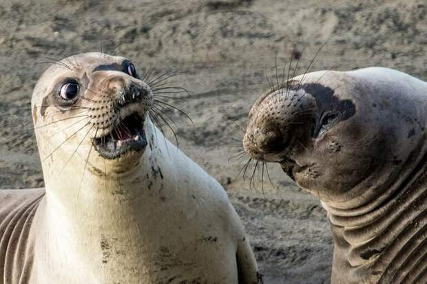 Georg Cathcart / Comedy Wildlife Photo Awards / Getty Images