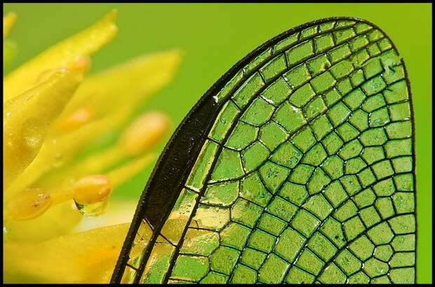 insects27 Портреты насекомых